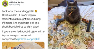 This Cat Proudly Brought Home A Bag Full Of Illicit Drugs