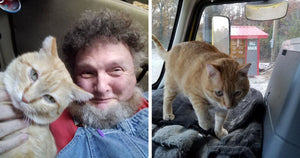 Truck Driver Finds Unusual Travelling Buddy In His Pet Cat