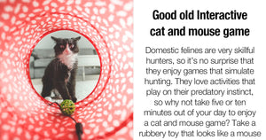 If You Need A Way To Keep Your Indoor Cat Mentally Stimulated, These Four Pieces of Advice Might Help
