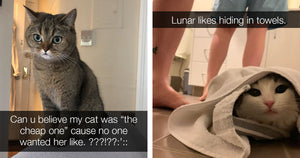 15 Recent Cat Posts to Brighten Your Day
