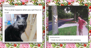 15+ Times Tumblr Purrfectly Nailed Cat Humor