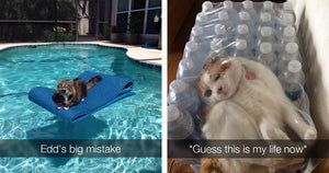 Hilarious Cats Who Got More Than They Bargained For And Immediately Regretted Everything