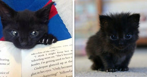 17 Reasons Why You Should Definitely Adopt a Black Cat