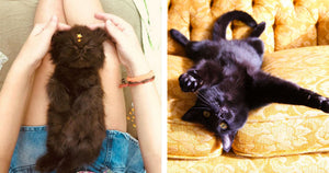 Undeniable Reasons You Should Adopt A Black Cat Right Meow