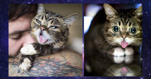 Lil Bub's Remains Will Be Sent To Space So She Can Always Watch Over Us