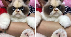 The Newly Discovered Grumpy Cat Looks Furious And The Internet Is Loving It