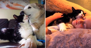 20 Year-Old Cat Finally Gets Adopted From The Shelter By This Loving Family