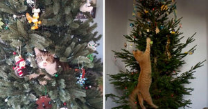 These Cats Got Into The Festive Season By Helping Their Owners Decorate The Christmas Tree
