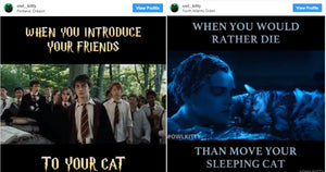 Owner of OwlKitty Hilariously Edits Movies With His Cat Into Them And They're Incredibly Funny