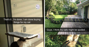 15+ Cats Who Rule Their Homes And Make Their Own Rules
