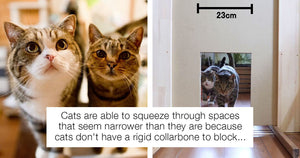 Hilarious Experiment Aims To Determine Just How Narrow Of A Gap Cats Can Squeeze Through