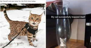 10+ Purrfectly Hilarious Cat Memes Guaranteed To Make You Laugh