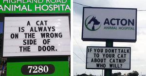 30 of Funniest Cat Jokes That You Can Find On Vet Clinic Signs, And They Are All Hilarious