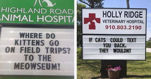 These Hilarious Signs At Vet Offices About Cats Are Spot-On