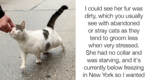 Stray Cat Begs Volunteers To Rescue Her And It's Seriously Precious