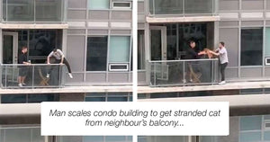 Hero Man Risks His Life To Save Cat Stuck On The Edge Of A Building