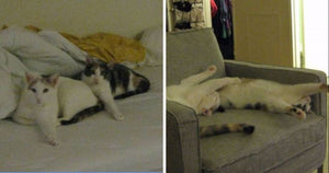 These Two Adorable Cats Are Always Naturally Synchronized