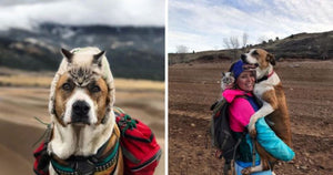 Meet The Dog And Cat Couple Who Loves To Go Hiking With Their Humans