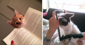 14 Cats Who Desperately Want Some Attention, But Only When You Start Reading