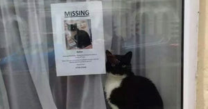 "Missing Cat Discovered Sitting Right Next To His Own ""Missing Cat"" Poster"