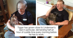 This Cat Demands Half An Hour Of Cuddle Time Every Morning