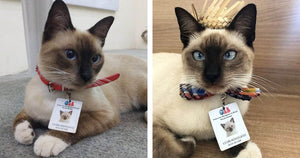 Public Complains About Wandering Stray Cat So The Nearby Law Firm Hires Him As A Certified Employee