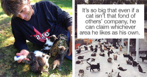 After Tragic Loss Of His Son, Man Opens Cat Sanctuary For 300 Cats