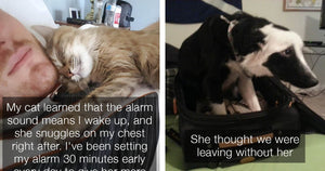 These Pets Are So Clingy They'll Do Everything In Their Power To Keep Their Humans From Leaving