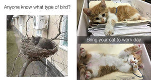 Cat Lovers Are Guaranteed To Love These Purr-fect Cat Memes And Pictures