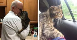Senior Kitty Finds His Forever Home At 15-Years-Old