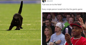 Football Game Suddenly Interrupted By A Black Cat At the MetLife Stadium