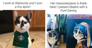 Here's A Compilation Post Of All The Best Cat Moments Shared Recently