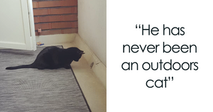 This Cat Was Allowed On The Balcony For The First Time And People Are Loving His Reactions
