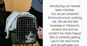 An Ottawa Brewery Hires Feral Cats To Get Rid Of Their Mouse Problem