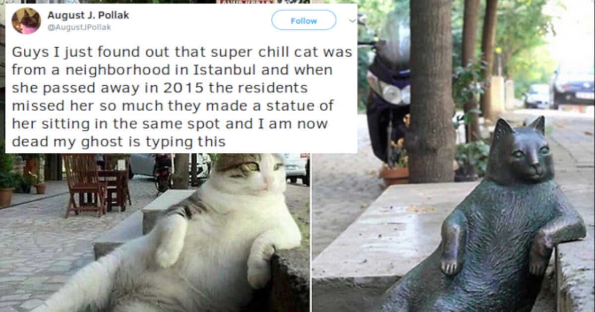 a8ebbd8569 Cat Tweets That Prove Cats Really Are The Best - Cats On Catnip