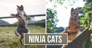A Japanese Photographer Specializes In 'Ninja Cats' And The Photos Are Adorable