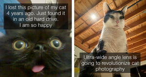 Adorable Cats Posts You Didn't Know You Needed In Your Life