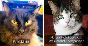 Cats On Catnip Fans Show Off Their Cats With Beautiful Eyes