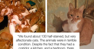 Woman In Russia Hoarded 130 Cats In Her Tiny Apartment