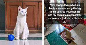 Cat Started Joining Her Family's Prayer Time Ever Since She Got Her Own Miniature Praying Rug