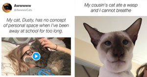 Here Are A Bunch Of The Best Recent Cat Posts To Make Your Day