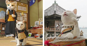 This Japanese Cat Temple Has Cat Monks And It's The Cutest Place On Earth