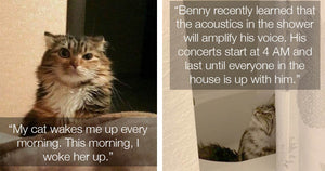These Cat Scenarios Are Strangely Familiar To Anyone Who Is Living Their Best Cat Filled Life