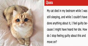 This Person Turned To The Internet To Feel Better After Their Cat Died In Their Bedroom