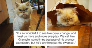 Ten-Year-Old Shelter Cat Finds A Loving Home Again