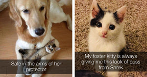 Adorable Pictures Of Cats That Will Make Your Heart Melt