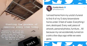 Frankie Muniz's Cat Just Destroyed His 5-Storey Home