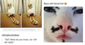 The Best Collection Of Hysterical Cats The Internet Has To Offer