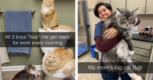 These Cat Pictures Are Exactly What You Need Right Now