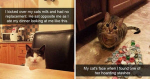 18 Hilarious Cats On Snapchat Guaranteed To Make You Laugh Hysterically